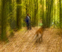 forest with woman and dog
